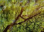 summertime green by Dieffi