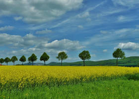 yellow road by Dieffi