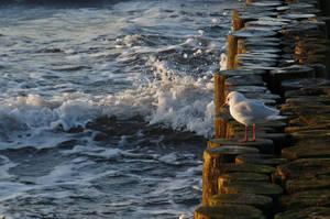 BALTIC SEA by Dieffi