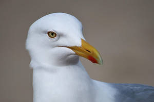 portrait of a seagull by Dieffi