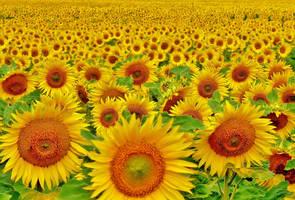 endless sun by Dieffi