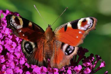 colourful eyes by Dieffi