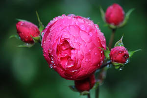 wet and red by Dieffi