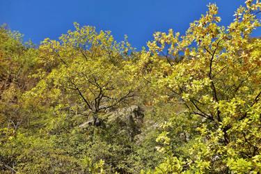 autumnal oak by Dieffi