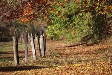autumnal fence by Dieffi
