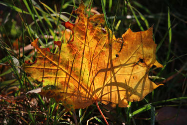 autumnal shadows by Dieffi