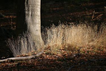 autumnal light by Dieffi
