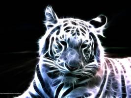White Bengal Tiger by zanardo