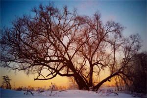 Tree sunset by ViktoriaGloriam