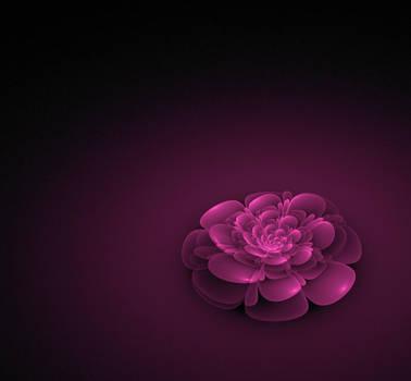 Pinklac by Felewin