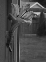 Windowpane Lily by Mondanian101