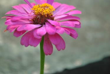 flower 3 by bluejellyforme