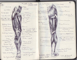 Study: Leg Musculature by SketchbookNoir