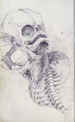 Fetal Skeleton by SketchbookNoir