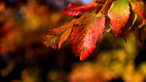 Last Rays Of Autumn by CedaCo