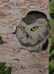 Owl by crazycolleeny
