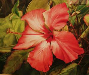 Hibiscus by ninokhan
