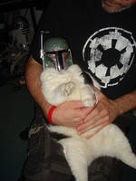 Boba Cat by starwarsgeekdotnet
