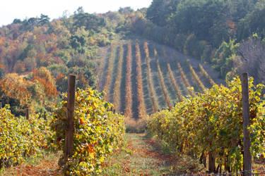 Vineyard by Lola22