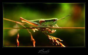 Hopper by photogenic-art