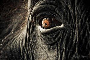 Elephant III by photogenic-art