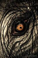 Elephant IV by photogenic-art