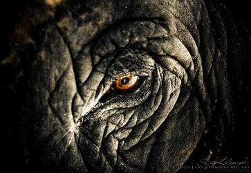Elephant VI by photogenic-art