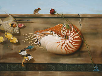 Nautilus by LindaRHerzog