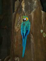 Parrot by davincipoppalag