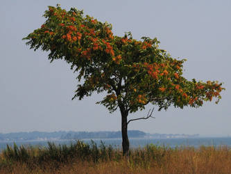 The Tree at the Beach by davincipoppalag