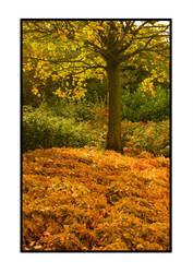 Autumn by yellownoise
