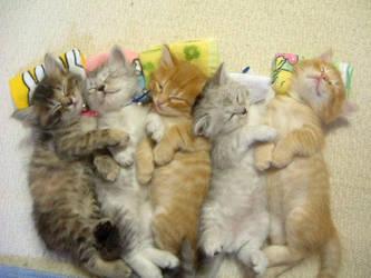 Kitties by Narro