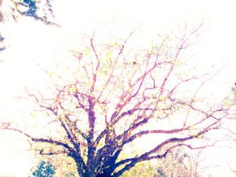 tree delight by FontKathleen