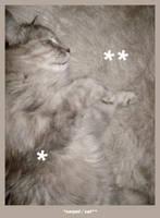 carpetcat by t-drom