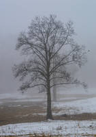 Winter2 by RAYNExstorm