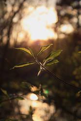 t at sunset by yamborko