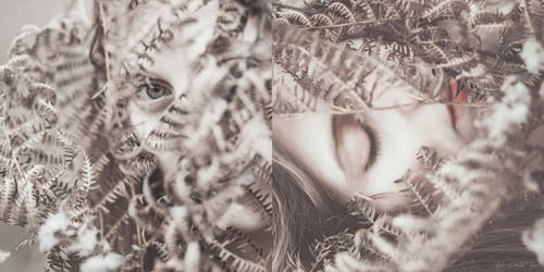 The fern's frame by Julieoftheworldtree