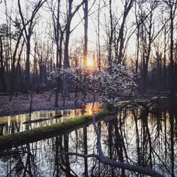 A Spring Sunset in Tobico Marsh by BrennaxAdaira13