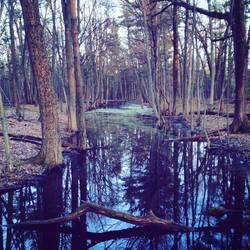 Algae on the Marsh by BrennaxAdaira13