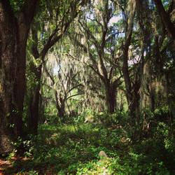 In the Swamp by BrennaxAdaira13