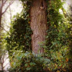 The Green Man's Splendor by BrennaxAdaira13