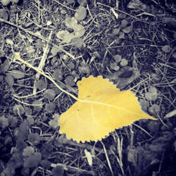 Fallen Leaf by BrennaxAdaira13