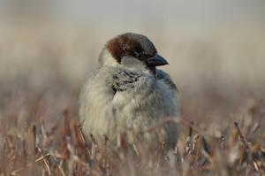 Mister Sparrow. by studiumprzedmiotu