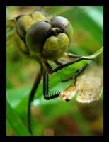 Dragonfly by purhipnoze