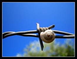 Snail by purhipnoze