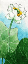 :Gift: White Lotus by pansy88
