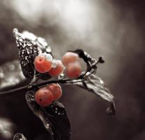 Seasons change by Peterix