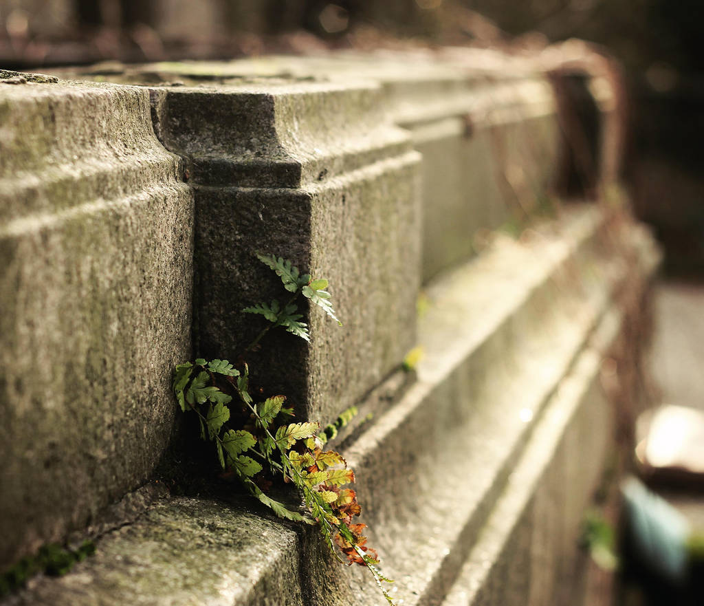 Life finds a way by Peterix