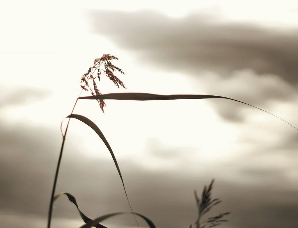 Follow the wind, it will carry you home by Peterix
