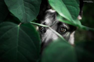 Hide and seek by Delariz